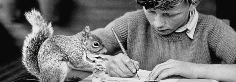 cropped-squirrel1.jpg